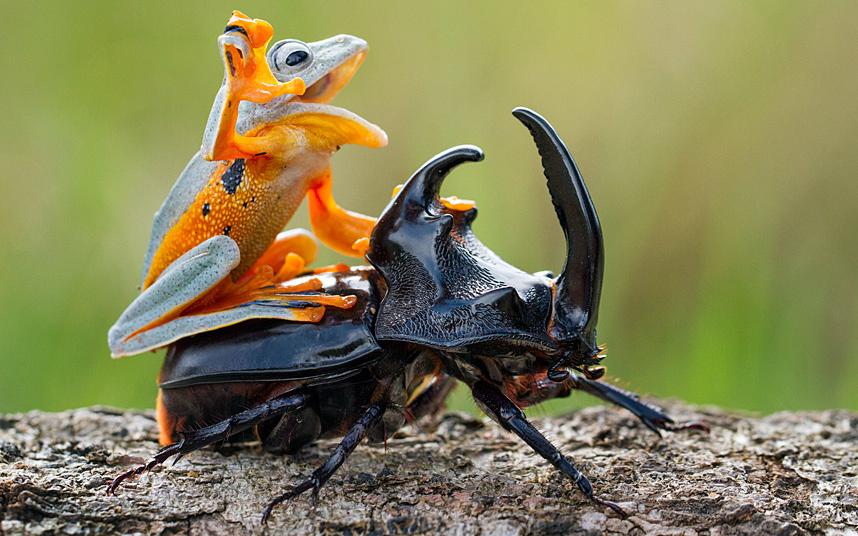 7. Парочка бабуинов. (Фото Knowsley Safari Park):