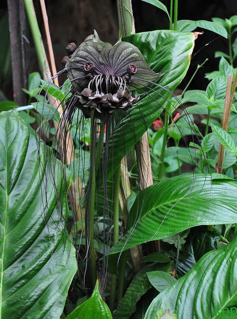 Это выглядит, скорее, как зубастое чудище сдлинной бородой, анебезобидное растение, которое можно