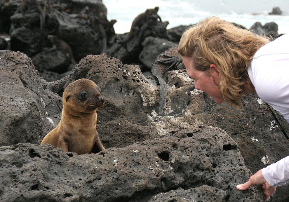 На Галапагосских островах очень мало естественных хищников. Один из крупных местных хищников — Галап