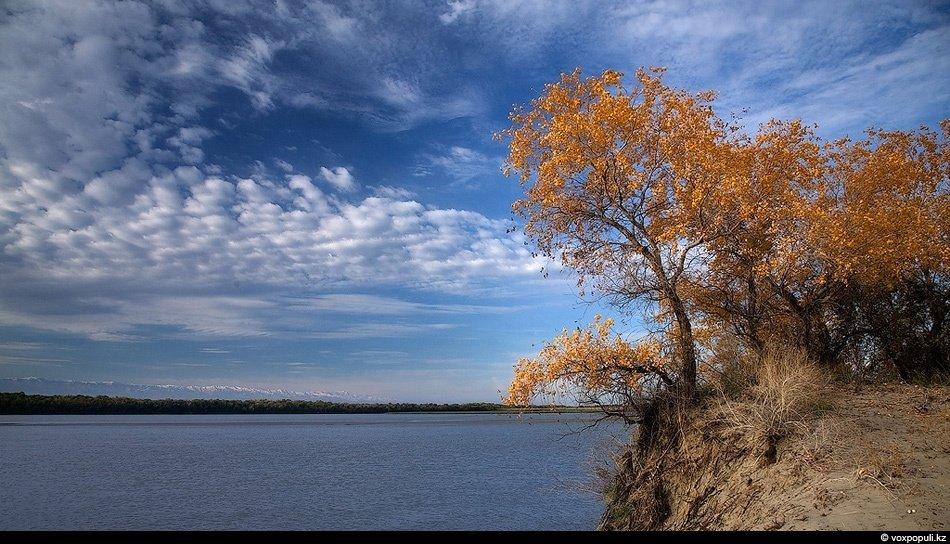 Дельта реки Или и ее окрестности до сих пор изобилует рыбой, а также здесь обитают различные виды пт