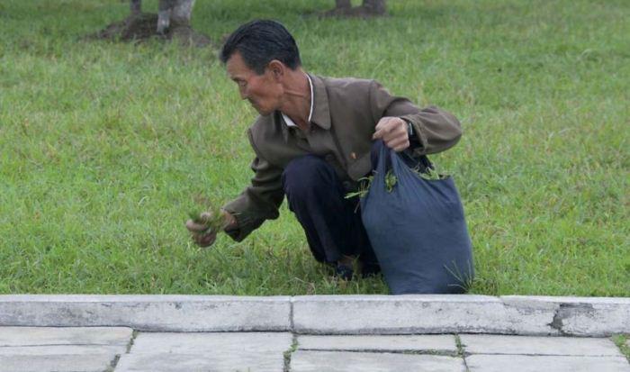 Такие фотографии время от времени попадают в западную прессу с заголовками, что жители Северной Коре
