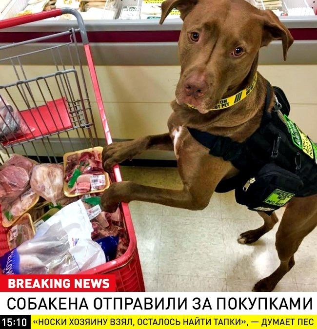 © breaking_animal / vk      Опроблемах ЖКХ