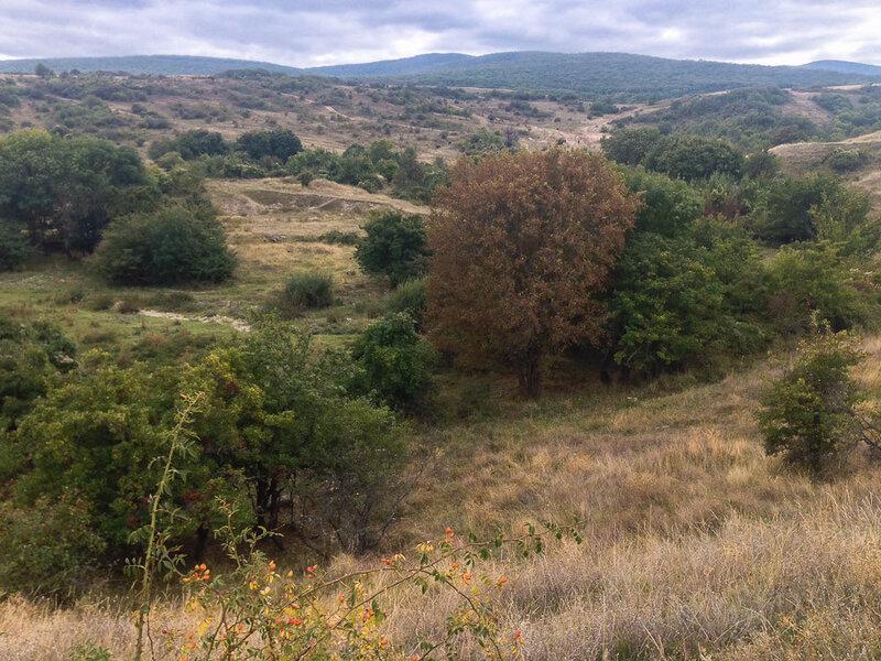 В окрестностях Старого Крыма