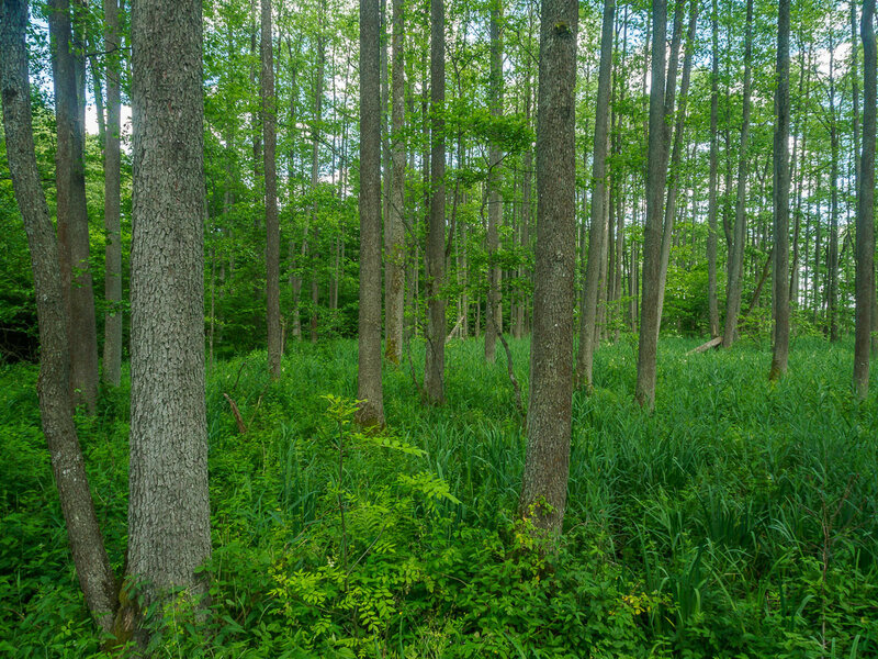 Лес пущи разнообразен.