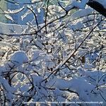 Зима в Солнцево Инстаграм Солнцево https://www.instagram.com/p/BfPvAVXn2bu#solntsevo #солнцево #солнцевский