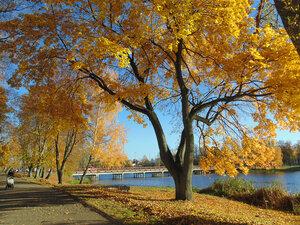 Осенние прогулки. Советск...