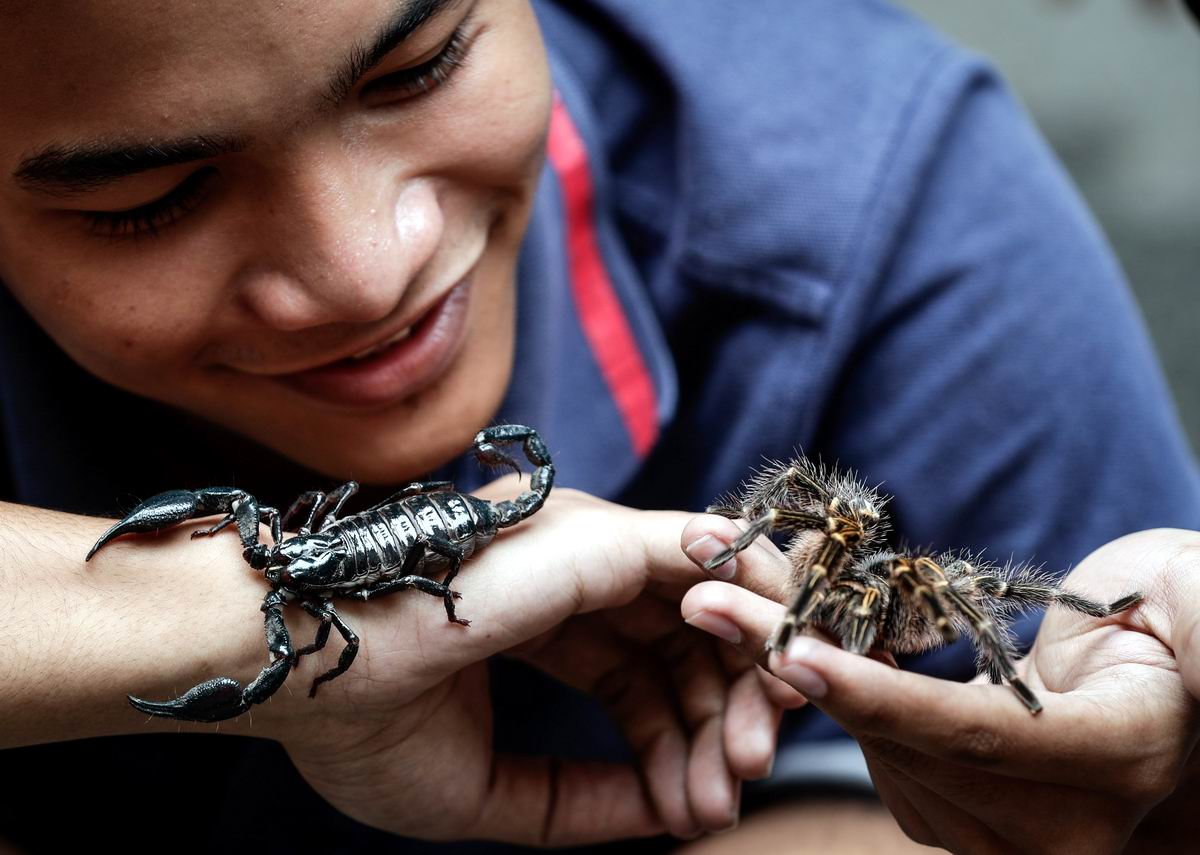 Такие милые создания: Филиппинские забавы