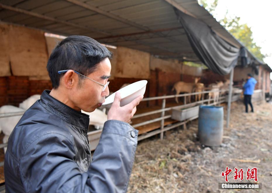 Китайский козел дает молоко