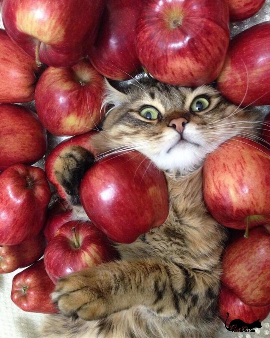 Смотреть, картинки прикольных яблок