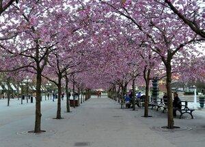 Площадь Кунгстрадгорден в Стокгольме