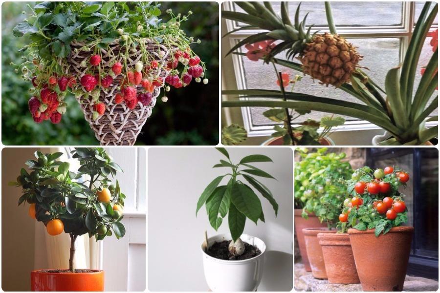 Выращивание ягод и фруктов из семян и косточки в домашних условиях, видео