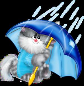 котик под зонтом