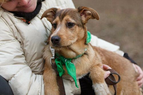 Джесси собака из приюта догпорт фото