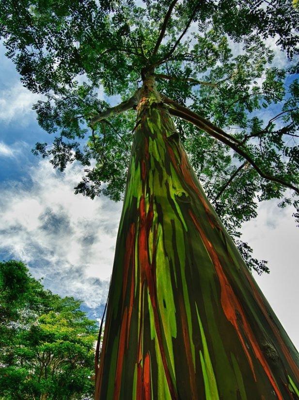 Топ-16 деревьев, которые выглядят так, будто они с другой планеты