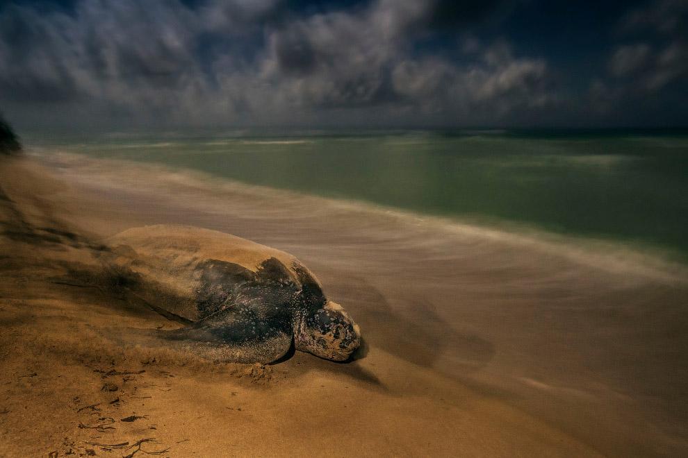 14. Мексиканский фотограф сумел снять короткую и ожесточенную схватку двух американских крокодилов в