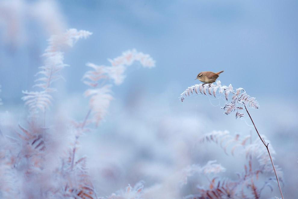 7. Победитель в категории «Ботаническая Британия». Тростник. (Фото Steve Palmer   British Wildlife P
