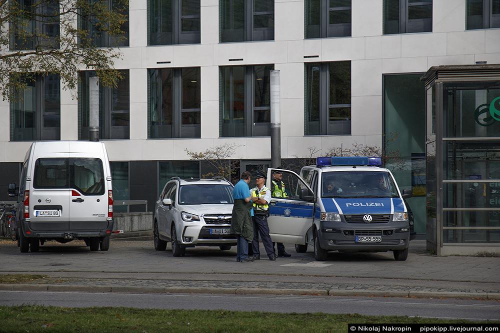 В Германии пони забеременела от беженца