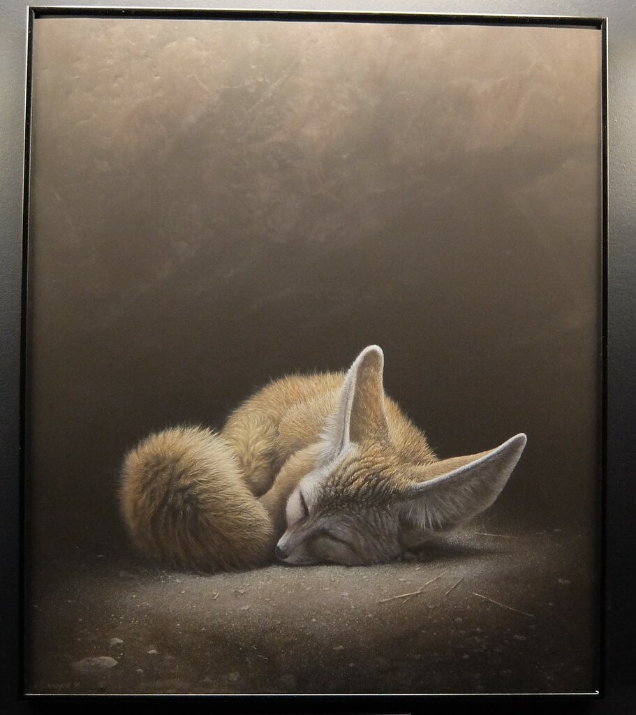 Спящий фенек