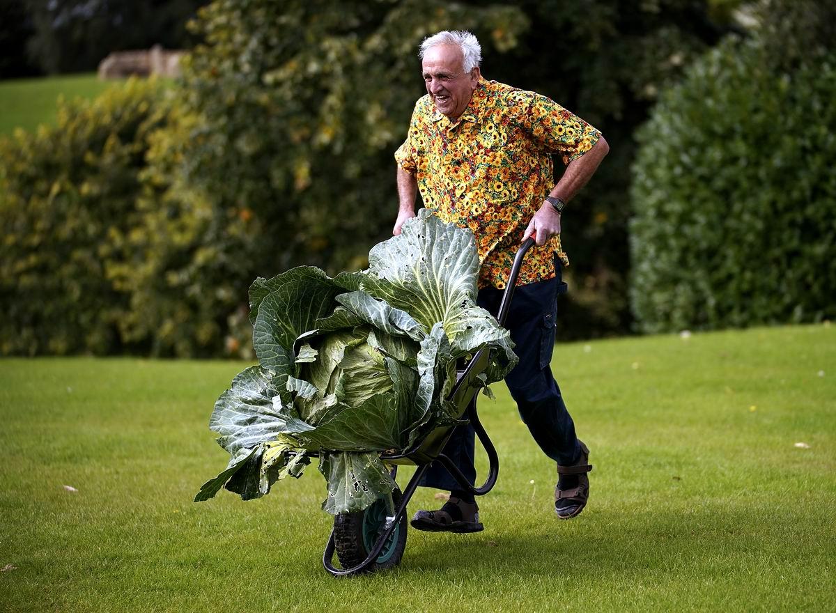 Хороша моя капустка: Американский пенсионер и весомый результат его труда