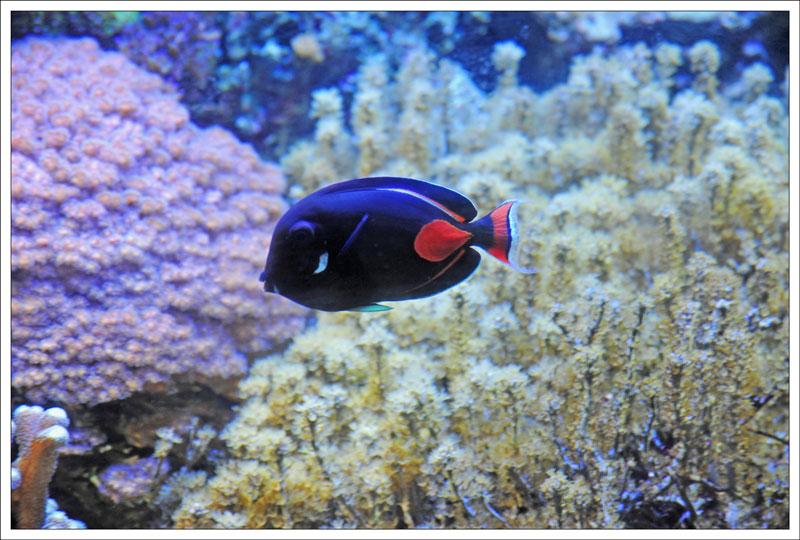 Генуэзский аквариум. Хирург Ахиллес. Фото