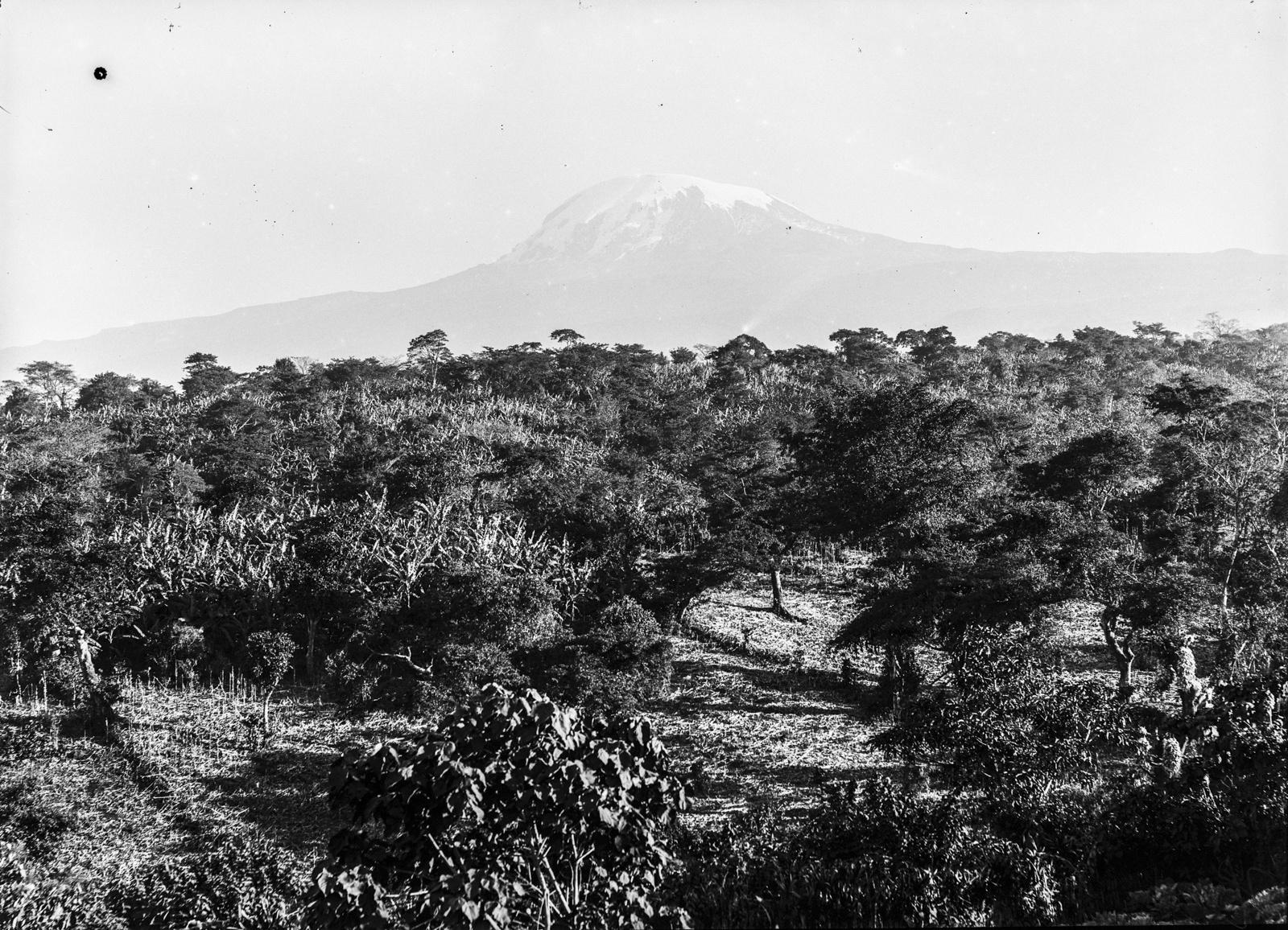 103. Местность в районе Килиманджаро
