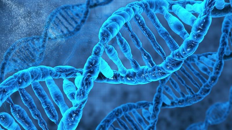 Интересные факты о ДНК