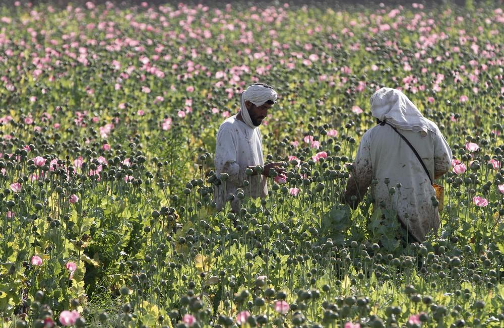 APphoto_Afghanistan Opium
