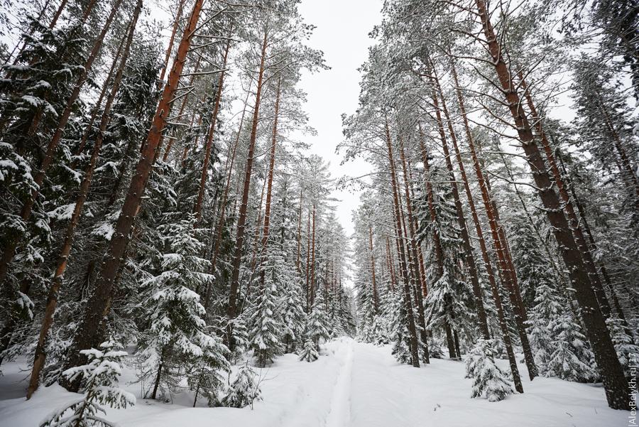 alexbelykh.ru, Чёртов лес
