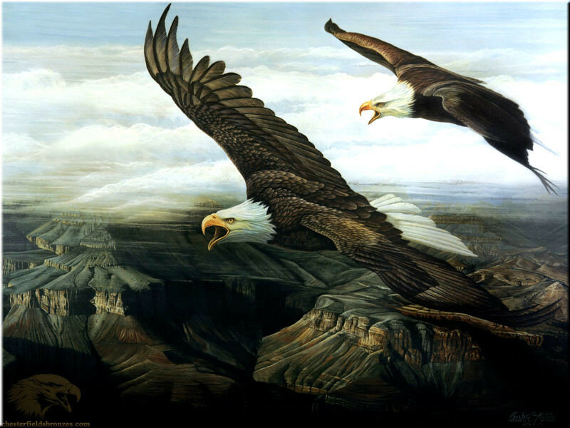 Рисунки орел в горах