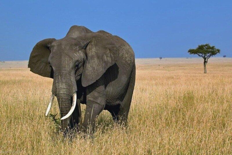 Дом престарелых слонов во Франции