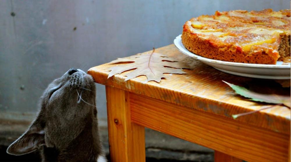 © gourmandelle   Исвечек сосенним ароматом