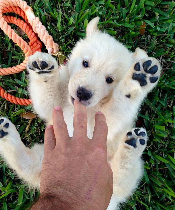 1. Кажется, это вовсе не щенок, а полярный медвежонок