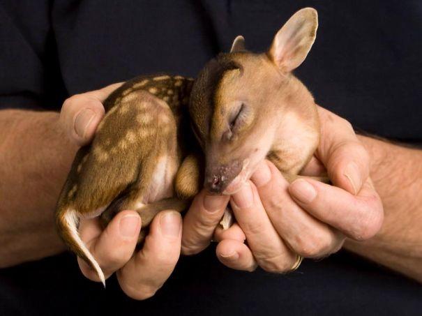 18. Малыш-олененок