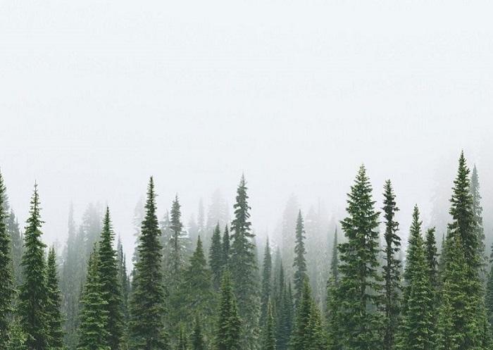 16. Опускающийся туман