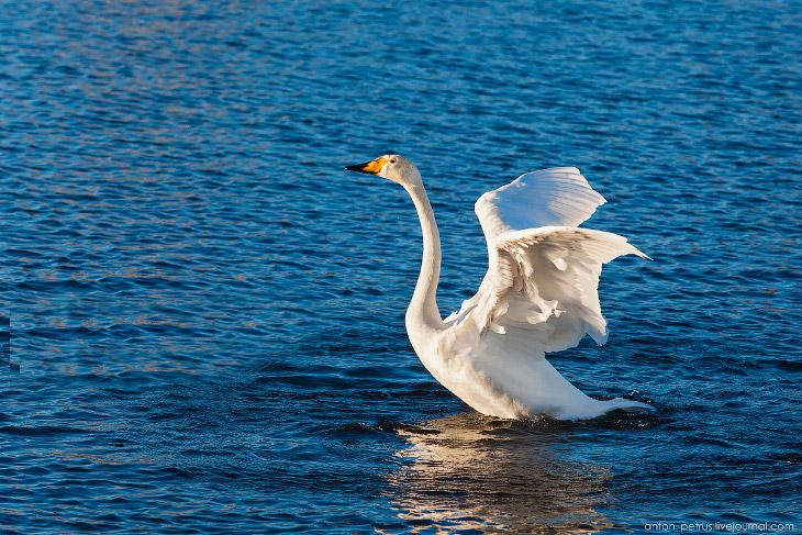 Балет на Лебедином озере (17 фото)