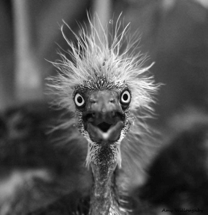 Удивленные животные (45 фото)