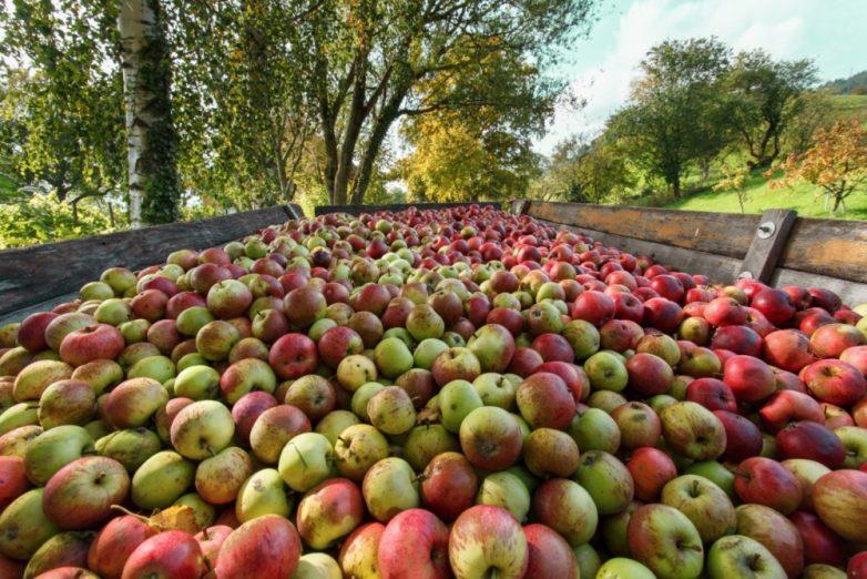 15. Это сезон яблочных пирогов и заготовок на зиму
