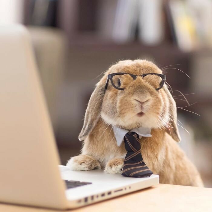 Кролик в образе офисного сотрудника