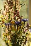 334.JPG Полевые цветы,