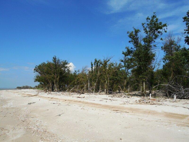 Лесок, на побережье ... DSCN5765.JPG