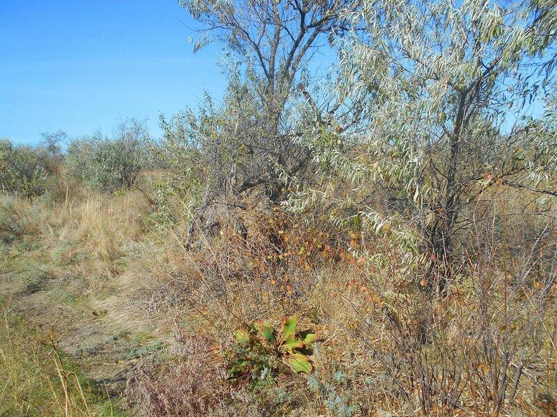 У тропы, в лесу ... DSCN9583.JPG