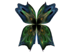 butterfly-7-bd-19-12-13.png