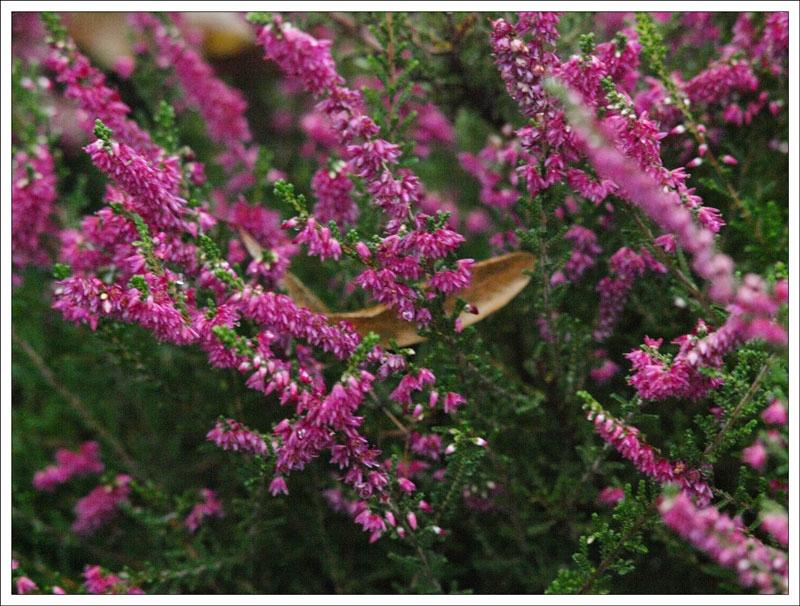 110_Flowers.jpg