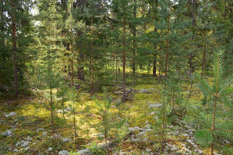 леса 12.jpg