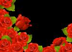 Beautiful Roses #7 (19).png