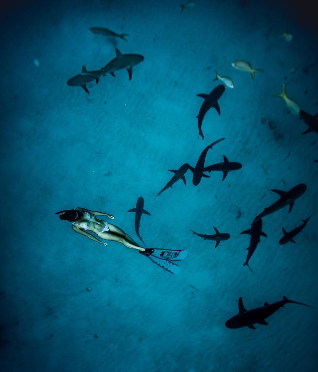 Австралийка с 12-ти лет плавает с акулами