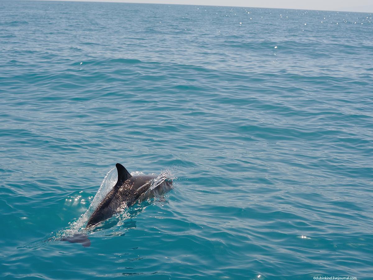 Куда девается член у дельфина это