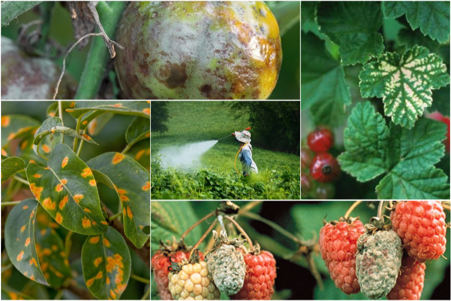 Борьба с заболеваниями растений