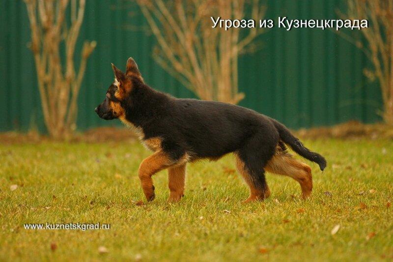 https://img-fotki.yandex.ru/get/477847/23658768.8/0_cef3f_44d30522_XL.jpg