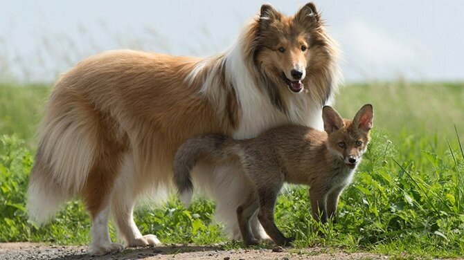 0 1788fb dcf40997 XL - Лучшие фотографии животных осени 2017